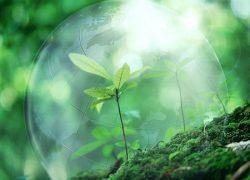 Примите участие в международной акции «Час Земли»!